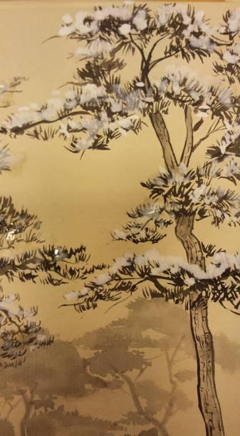 Particolare di un pino giapponese